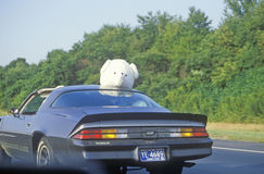 Stuffed animal on top of car on New Jersey Turnpike, NJ Stock Photos
