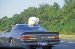 Stuffed animal on top of car on New Jersey Turnpike, NJ Stock Photos