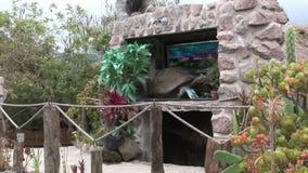 Stuffed animals turtle in hut indigenous Guarani Indians and Shuar. Galapagos, Ecuador - 28 May 2016: Stuffed animals turtle in hut indigenous Guarani Indians stock video