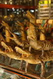 Stuffed baby crocodiles Royalty Free Stock Photography