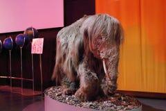 Stuffed baby mammoth Royalty Free Stock Image