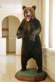 Stuffed bear. Big brown stuffed bear indoors Royalty Free Stock Photos