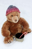 Stuffed Bear Braving the Cold Stock Image