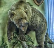 Stuffed bear Stock Photo