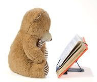 Stuffed bear reading a book Royalty Free Stock Photos