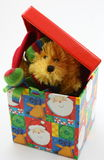 Stuffed bear toy peaking out of Christmas box Royalty Free Stock Photo