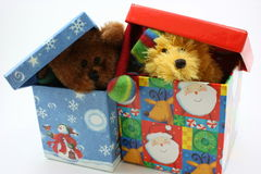 Stuffed bears together peaking out of gift boxes Royalty Free Stock Photos