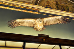 Stuffed bird of prey with widely spread wings in Natural History Museum ,Vienna Stock Images