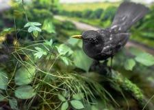 Stuffed Blackbird Royalty Free Stock Photography