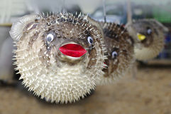 Stuffed blowfish selling in market Stock Photo