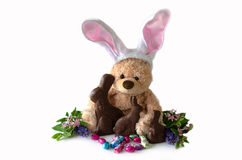 Stuffed bunny and chocolate bunnies. A toy bear with bunny ears is hanging with real easter treats such as chocolate bunnies and eggs. isolated on a white Stock Images