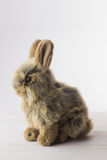 Stuffed bunny rabbit Stock Photo