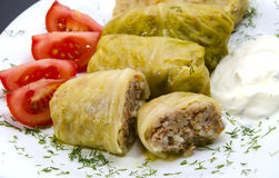 Stuffed cabbage leaves Stock Image