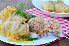Stuffed cabbage rolls - closeup Stock Photos