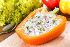 Stuffed capsicum. With cottage cheese, radish and cucumber stock photography