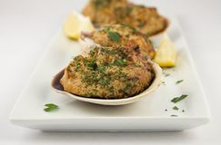 Stuffed clams appetizer Stock Image