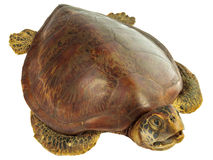 Stuffed dead turtle isolated on white Stock Photo