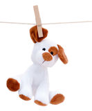 Stuffed dog hanging to dry Royalty Free Stock Photo