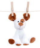 Stuffed dog hanging to dry Royalty Free Stock Photos