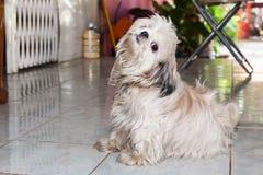 An stuffed dog Royalty Free Stock Image