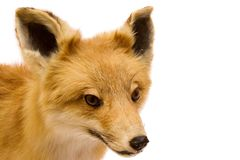 Stuffed Fox Royalty Free Stock Photo