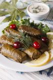 Stuffed grape leaves on a plate and sauce. vertical Stock Images