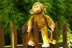 Stuffed Happy Ape Sitting on a Fence in the Sun Royalty Free Stock Photos