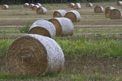 Stuffed hay stock photos