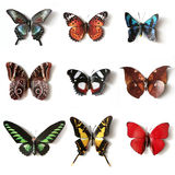 Stuffed insects Butterfly collection royalty free stock image