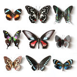 Stuffed insects Butterfly collection. Set Stock Photography