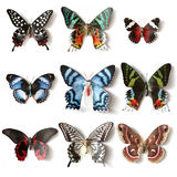 Stuffed insects Butterfly collection Stock Photos