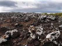 Stuffed lava on island Islote Tintoreras commemorates the moonland, Galapagos, Ecuador. One Stuffed lava on island Islote Tintoreras commemorates the moonland stock images