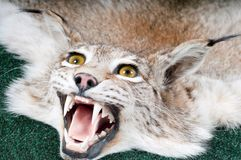 Stuffed lynx Royalty Free Stock Images
