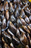 Stuffed mussels Royalty Free Stock Photo
