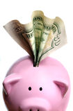 Stuffed piggy bank with US dollars Stock Image