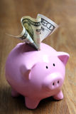 Stuffed piggy bank with US dollars Royalty Free Stock Image