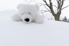 Stuffed Polar Bear Toy on Snow #2 Stock Photography