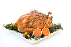 Stuffed Roasted Turkey on white Royalty Free Stock Photo