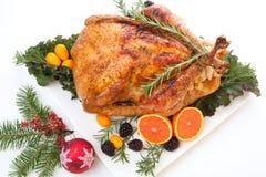 Stuffed Roasted Turkey on white Stock Photography