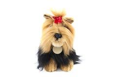Stuffed shaggy toy dog. Isolated over white stock photo