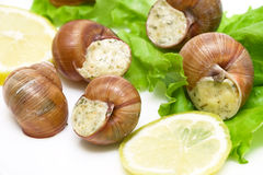 Stuffed snails, lemon and lettuce closeup Stock Photo
