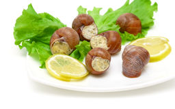 Stuffed snails, lemon and lettuce leaves on a plate closeup Royalty Free Stock Image