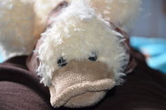 Stuffed Toy Royalty Free Stock Photos