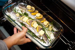 Stuffed trout with lemon dish Stock Images