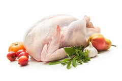 Stuffed turkey Stock Images