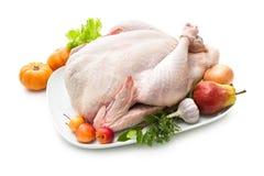 Stuffed turkey Royalty Free Stock Image