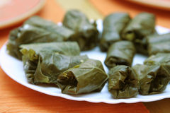 Stuffed vine leaves. On a white plate, shallow depth of field Stock Image