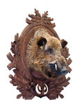 Stuffed wild boar head Royalty Free Stock Photo