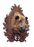 Stuffed wild boar head. On white Royalty Free Stock Photo