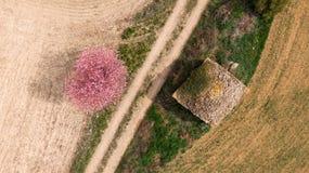 Stuga och träd fotografering för bildbyråer